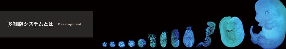 多細胞システムとは